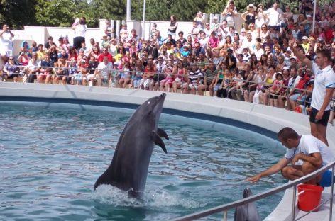 Delfinii Ni Ni şi Chen Chen dau spectacol în  casă nouă