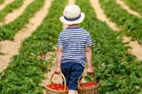 Consultanţă pentru accesarea de fonduri UE în agricultură