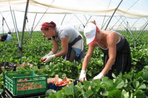 800 de locuri de muncă în agricultură, în Spania