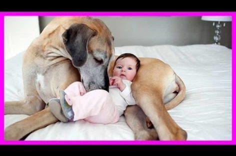 Căţei care au grijă de bebeluşi