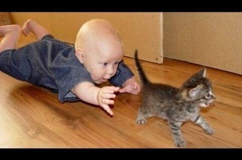 Pisicuţe şi bebeluşi