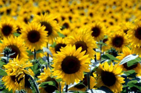 Vremea în august, septembrie şi octombrie – să ne bucurăm de căldură