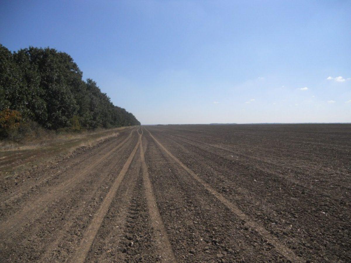 Dreptul de proprietate asupra terenurilor de către cetăţenii străini