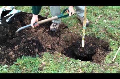 Trinitenii de Jos, comuna unde copacii se plantează, nu se taie