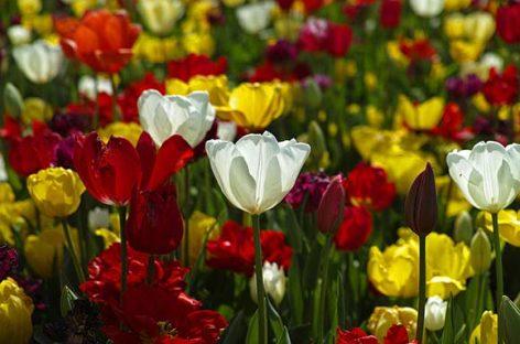Tradiţii şi obiceiuri de Florii. Peste 1,5 milioane de români îşi serbează numele