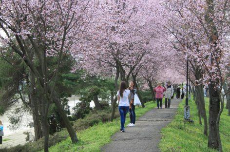 Vremea de Paşte: în general timp frumos şi cu maxime de până la 22 de grade