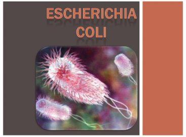 Escherichia coli: Transmitere, simptome şi tratament