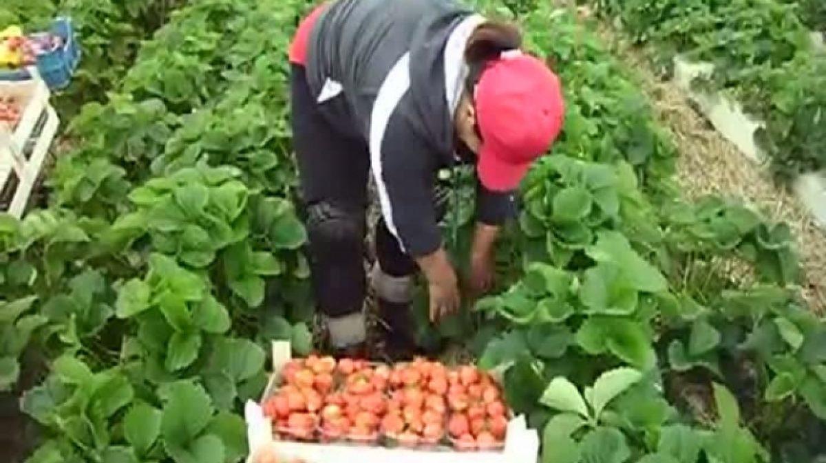 Locuri vacante în UE/Agricultorii, cei mai căutaţi
